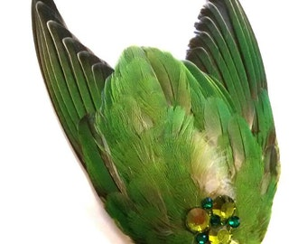 real stuffed love bird wings hairpin/hair clip curiosity tropical fantasy feathers green with real swarosky stones taxidermy