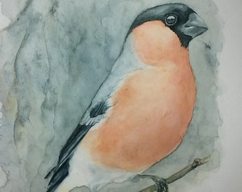 The bullfinch original watercolor painting bird