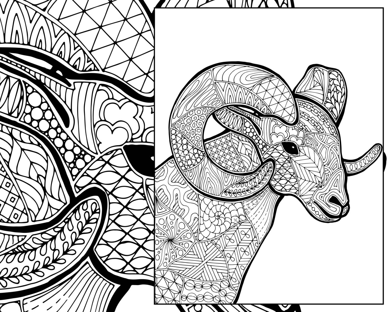 zoom - Sheep Coloring Page