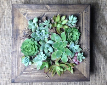 "10""x10"" Living Wall Succulent Planter Vertical Hanging Succulents Garden Art Rustic Wood Frame Valentine's Flower Bouquet Gift"