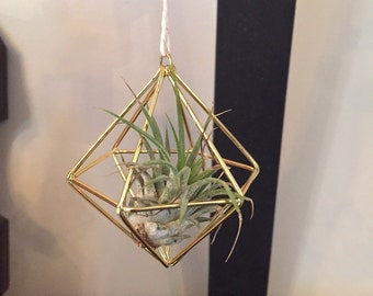 Himmeli style gold air plant holder (air plant inluded)