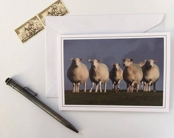 Greeting Card - Looking Sheepish