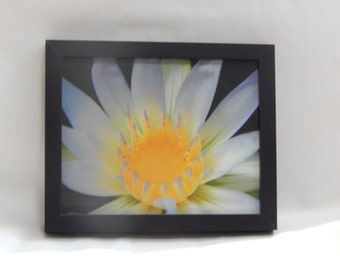 Amazon Waterlily Photography Print