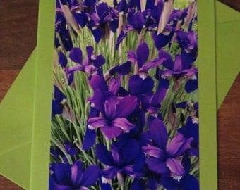 Irises.  Photo greeting / note card. Blank inside.
