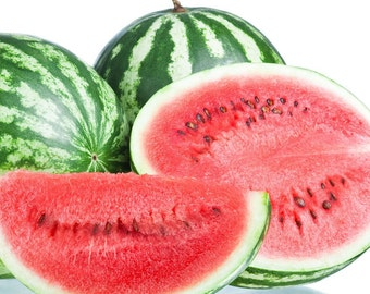 Watermelon Fragrance Oil Premium Grade Soap and Candle Supplies and Diffuser Oil