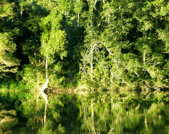 Mulgrave River Reflections