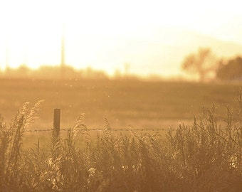 Art Photography: BURNISHED FIELDS, country landscape, sepia photograph, nature photography, nature art, country decor, wall art, country art