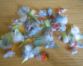 Lot of parrot small feathers