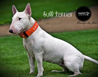 Bulterrier leather collar