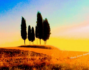 Photography Italy, Color burst in Tuscany, Tree photos, landscape photos, Italy photos,
