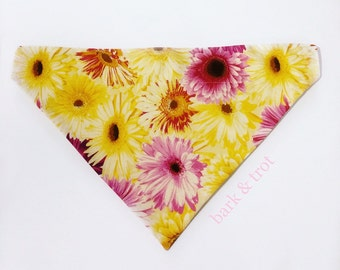 You Are My Sunshine Over Collar Dog Bandana