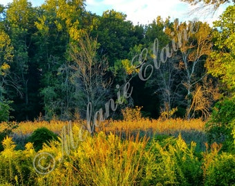 Late Afternoon Marshlands