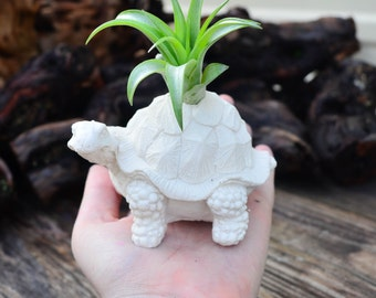 Customize your own Turtle Planter, Air Plant Holder, Handmade Turtle Plant Holder, Air Plant Terrarium Kit, Gifts under 15, Turtle Lovers