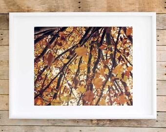Autumn wall art, fall nature photography, fall art print, fall leaves print, fall fine art photography, fall rustic home decor, fall print