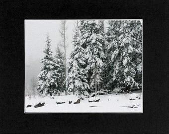 Photo Snow in Arizona