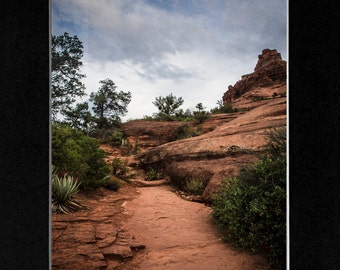 Photography Sedona Bell tree