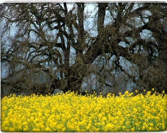 Oak Tree - Mustard - Sonoma