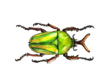 Original Beetle Artwork, Stag Scarab Illustration, Colored Pencil Art, Realistic Insect art, Animal Painting, A4 wall art, Entomology