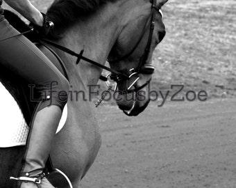 black and white horse profile