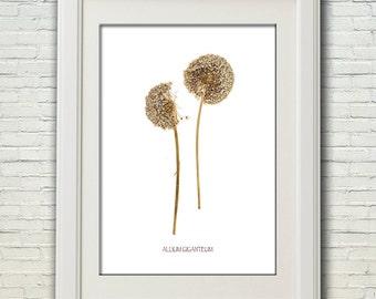 Botanical print 18