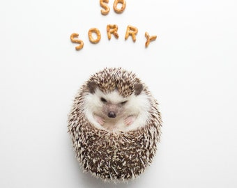 So Sorry - Hedgehog Greeting Card