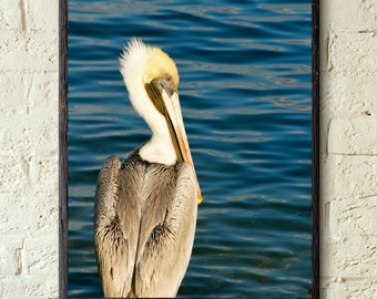 Single Pelican on the Water