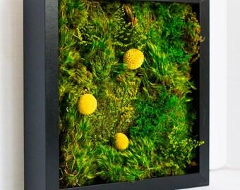 """Moss Wall Art ~ Moss Art Work ~ REAL Preserved Moss ~ No Maintenance Required ~ 10""""x10"""" ~ """"Golden Eye"""""""