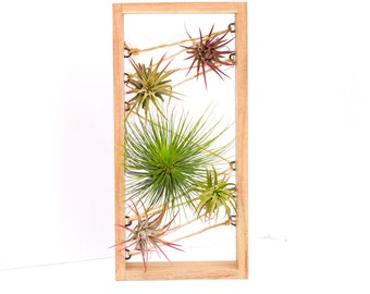 Air Plant Wooden Box Display