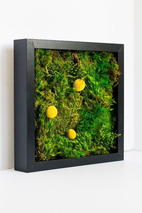 moss wall art moss art work real preserved moss no