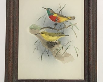 Midcentury vintage print Sun Bird No.4 , exotic birds, male and female, colorful fowl, nature scene, framed with glass, empirical print