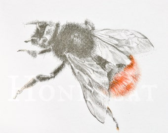 Original Bumblebee drawing, framed