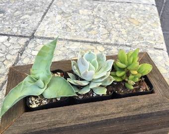 "4""x8""x2.75"" Succulent planter box"