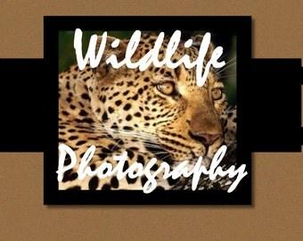 Photography Banner Set, Shop Banner Set, Custom Banner,Branding Design, Shop Banner, Graphic Design, Banner Design, Premade Banner
