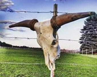 Texas Longhorn European Style Mount Skull & Horns