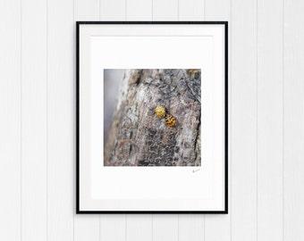 Driftwood & Laybug, Coastal Beach Decor, Nautical Wall Art Print, Printable Photo, Instant Digital Download, Modern Minimalist, Cottage Art