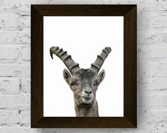 animal print, animal print nursery, capricorn print, nursery decor, animal art, animal wall art, baby room print, baby room wall art