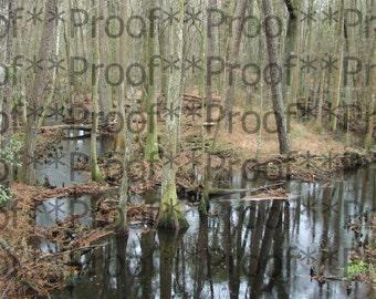 """Georgia Swamp Lithograph 11"""" x 14"""""""
