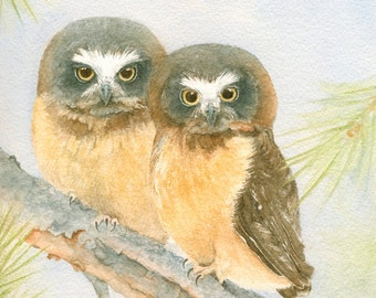 Saw-whet Owlets Original Watercolor