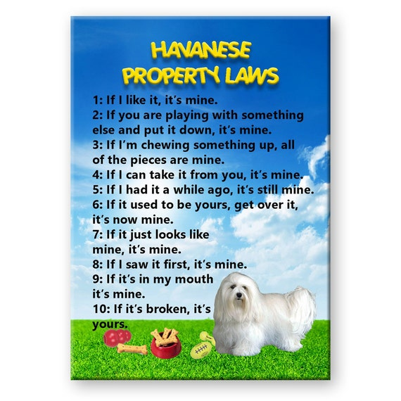Havanese Property Laws Fridge Magnet No 1
