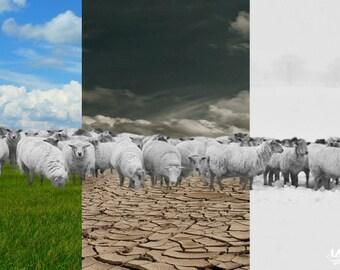Postcard sheep Worldtour