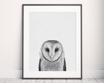 Owl Print, Animal Print, Nursery wall art, Printable Wall Art, Barn Owl Photo, Owl art, Kids print, Animal Photo, Wall Decor, Nursery Print