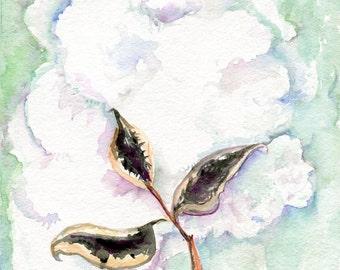Cotton watercolor painting, Cotton Boll watercolors paintings original, Small Botanical Wall Art 8 x 10 watercolor cotton, Modern Minimalist