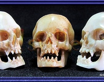 Vampire Skull Beads - Individually Hand-carved From Water Buffalo Bone