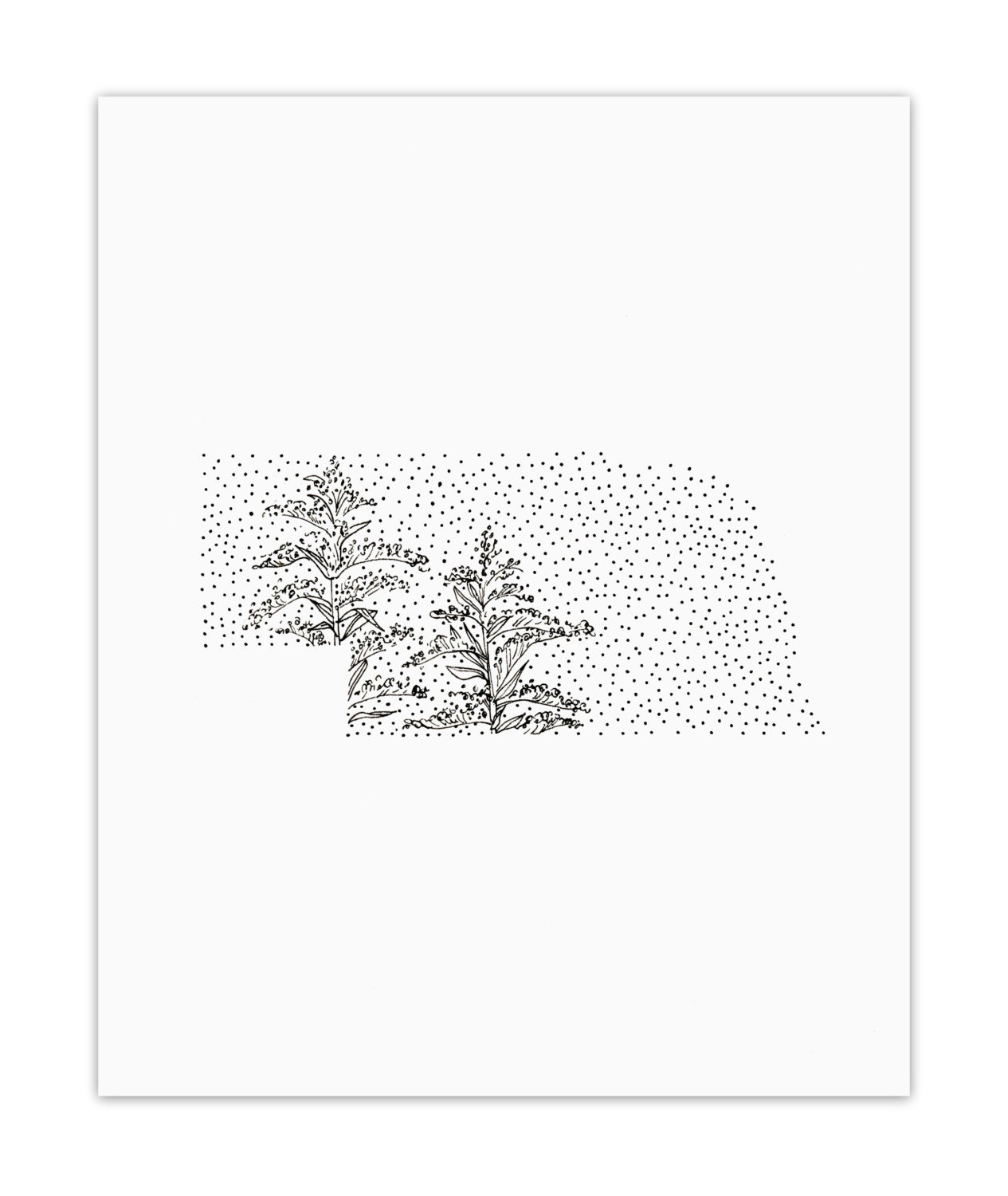 Nebraska Goldenrod State Flower Drawing Giclee