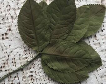 Vintage East Germany Medium Green Satin Fabric Millinery Leaves 1950s  VL C1