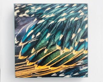 Exquisite Starling Feathers - Ready to Hang Wooden Panel -  Fine Art Image Collection on  5-inch Square, Birch Panel