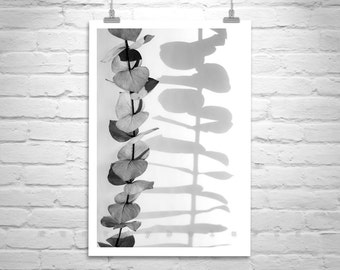 Shadow Photography, Black and White, Botanical Art, Still Life, Nature Morte, Abstract Wall Art, Organic Art, Eucalyptus Art, MurrayBolesta