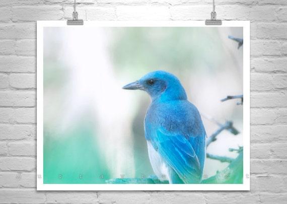Bird Picture, Blue Bird Photograph, Bird Art, Nature Photography, Art Print, Mexican Jay, Madera Canyon, Spring Art, Santa Rita Mountains