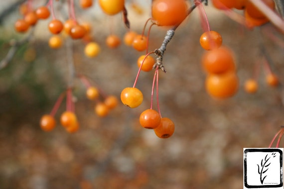 """Orange Berries,"" Indianapolis Museum of Art, Indianapolis, Indiana, 2013."