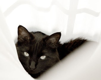 Animal Art Photography, Black Cat Print, Feline Wall Art